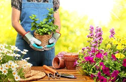 Regular Garden Maintenance in Tooting, SW17